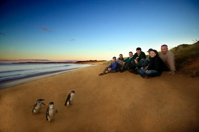 Phillip Island Ultimate Penguin Eco Tour or Skybox Experience - Redcliffe Tourism
