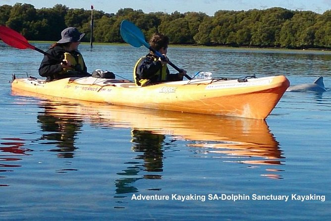 Dolphin Sanctuary and Ships Graveyard Kayak Tour