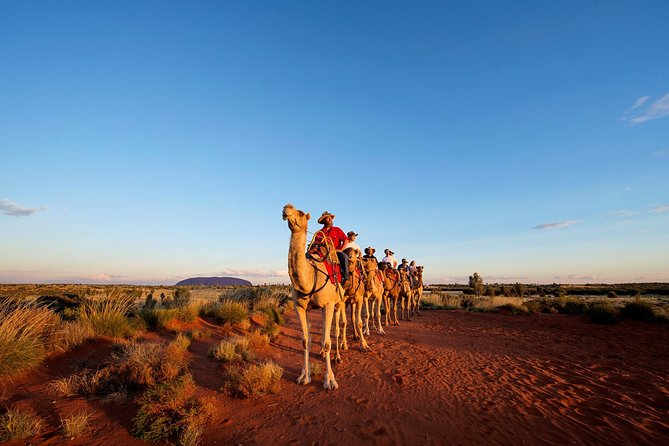 Uluru Camel Express Sunrise or Sunset Tours - Redcliffe Tourism