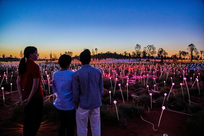Uluru Field of Light Sunrise Tour - Redcliffe Tourism