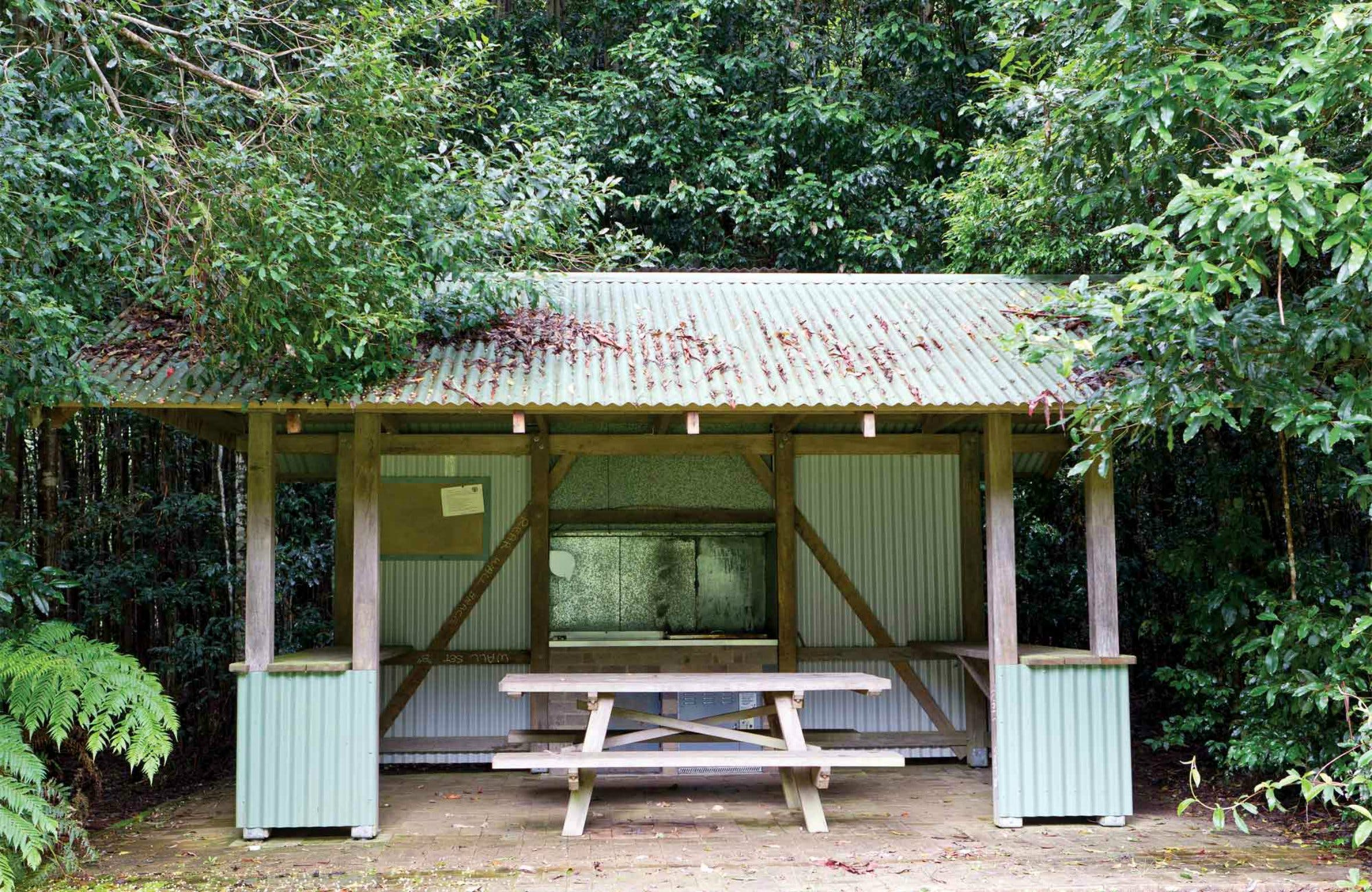 Coachwood Picnic Area - Redcliffe Tourism