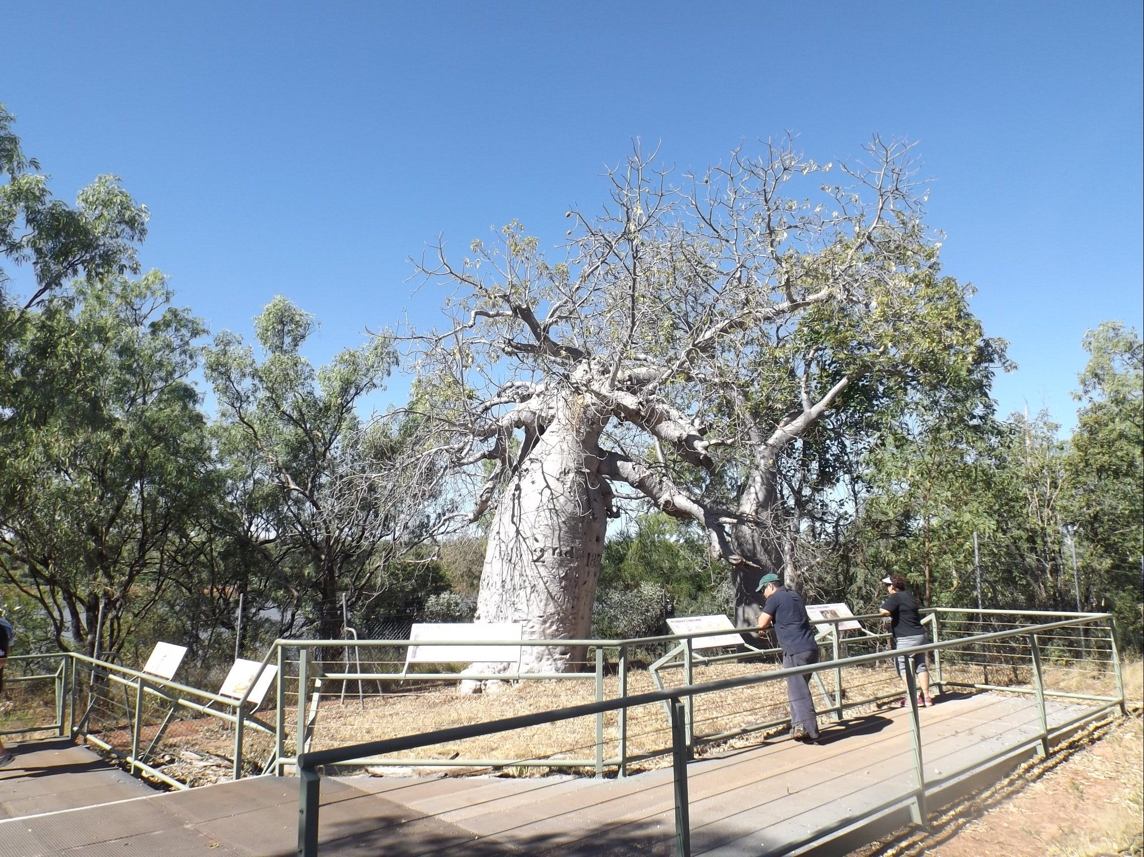 Gregory's Tree Timber Creek - Redcliffe Tourism
