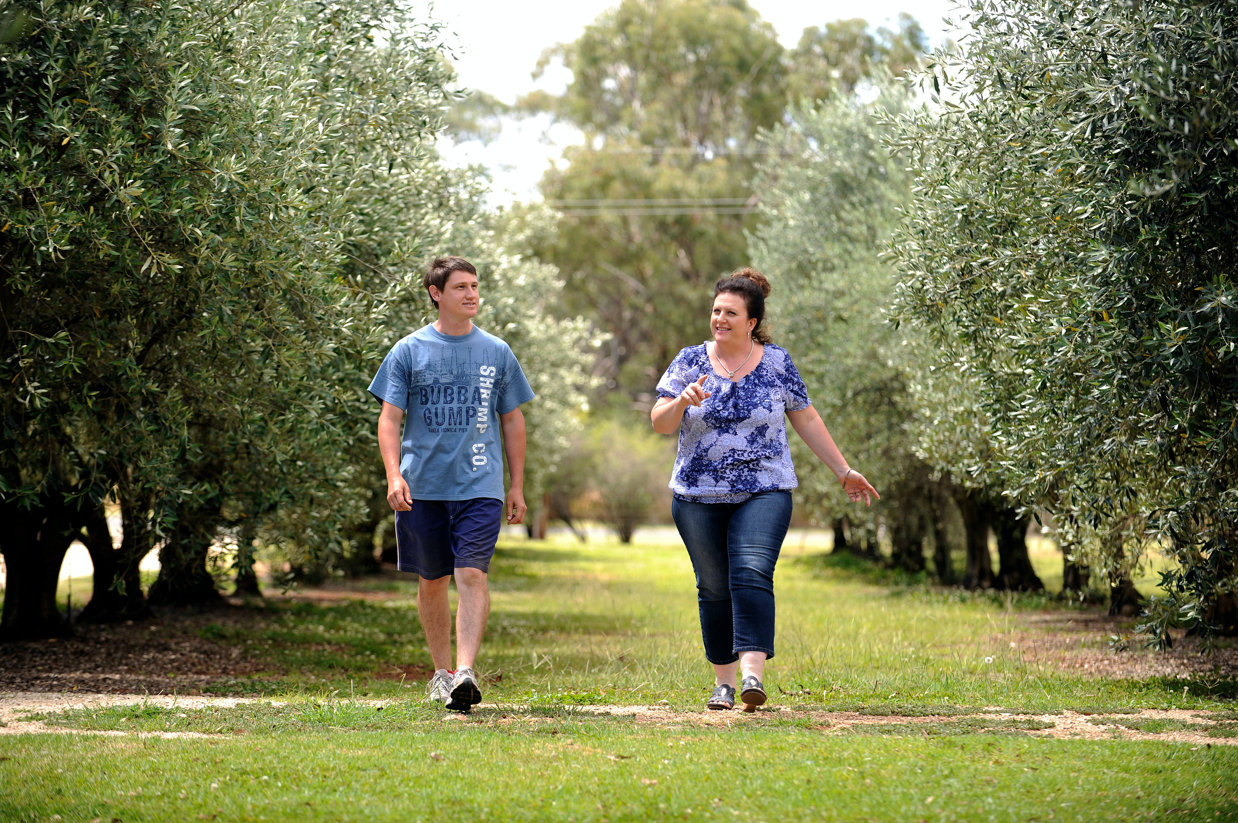 Olives of Beaulieu - Redcliffe Tourism