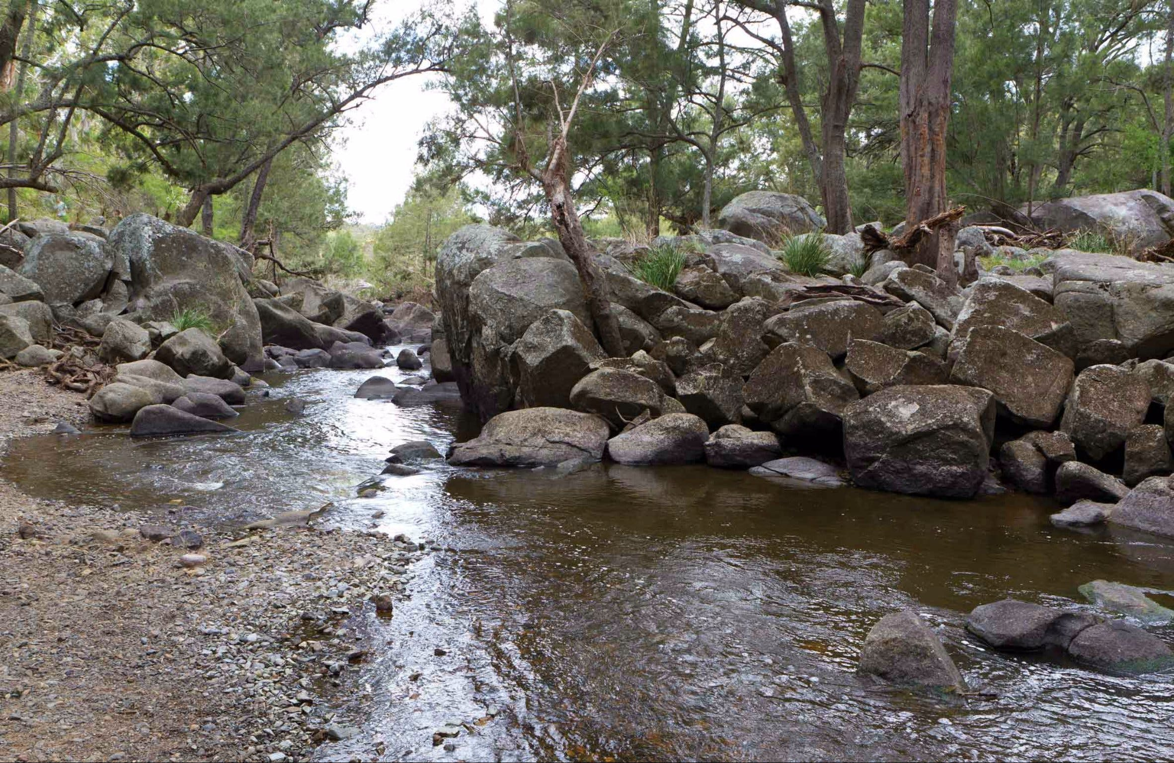 Threlfall Walking Track - Redcliffe Tourism