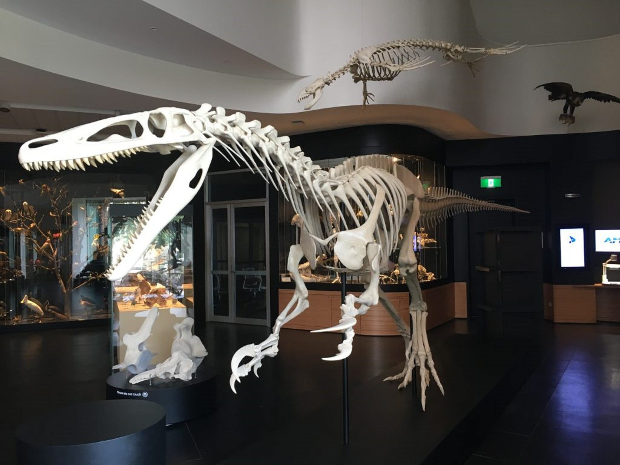 UNE Natural History Museum - Redcliffe Tourism