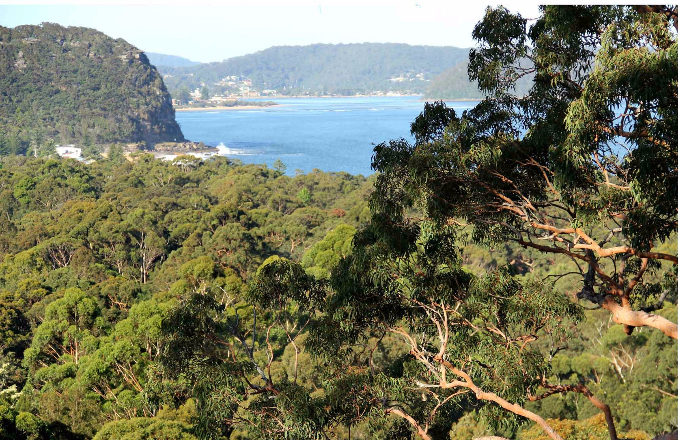 Patonga to Pearl Beach Walking Track - Redcliffe Tourism