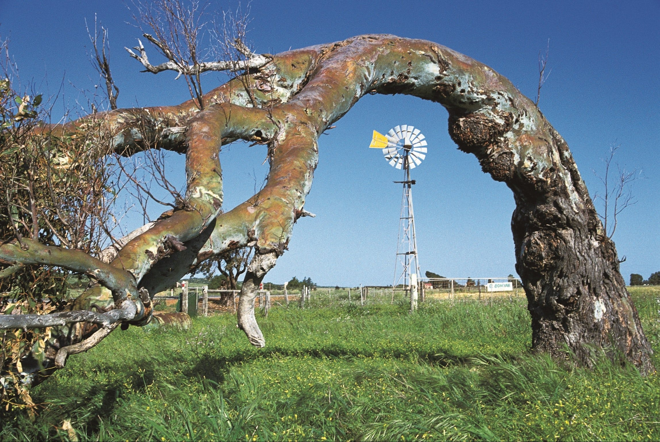 Greenough Leaning Trees - Redcliffe Tourism
