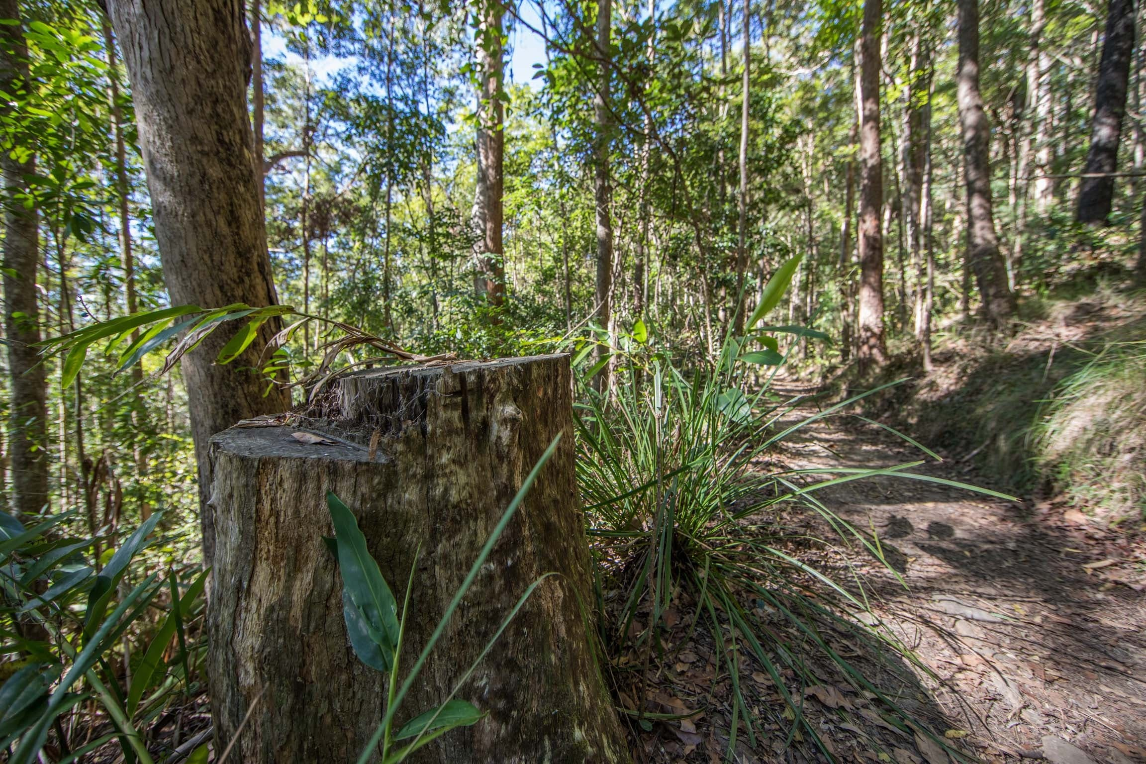 Thylogale Track - Redcliffe Tourism