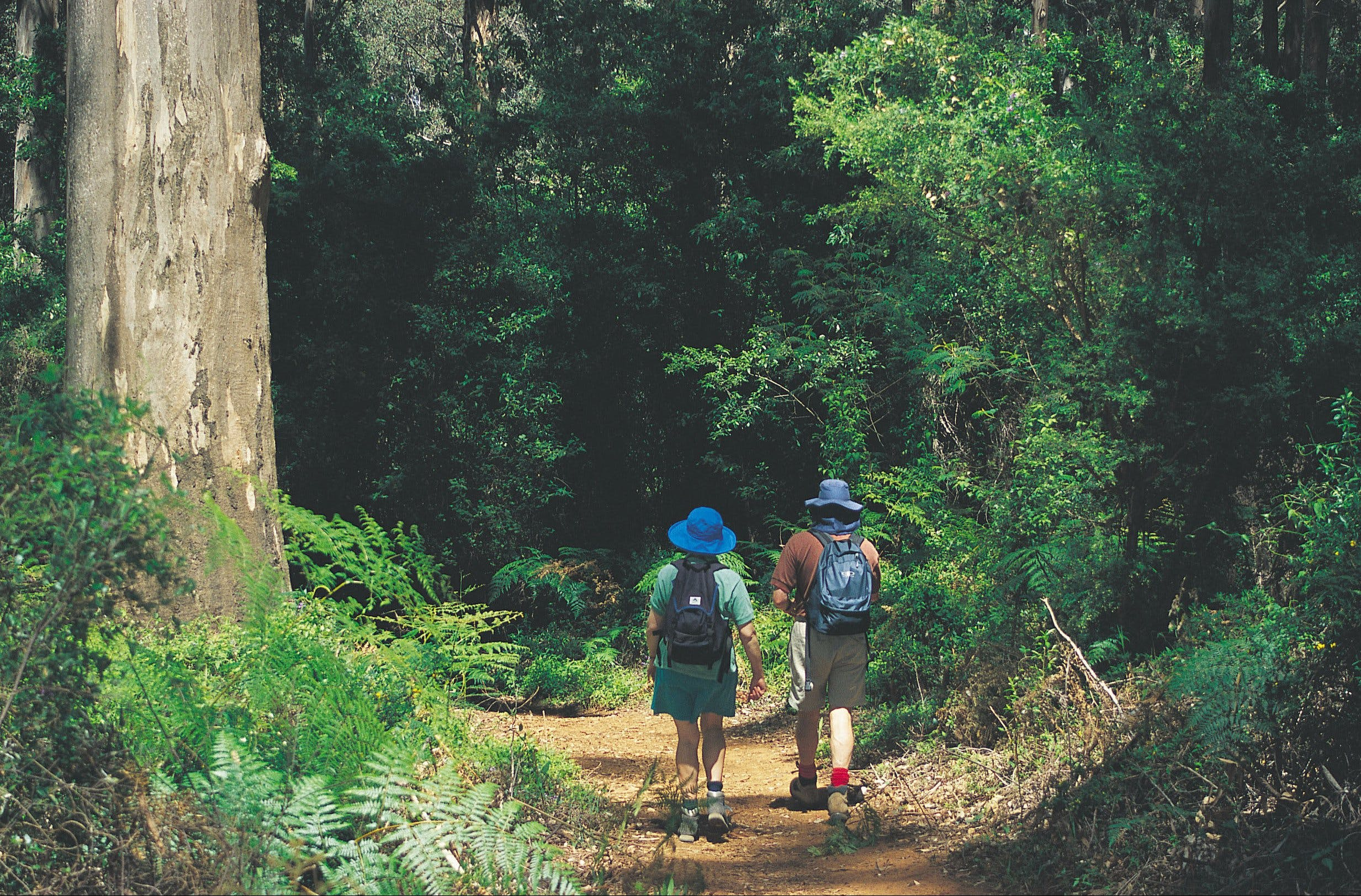 Gloucester National Park - Redcliffe Tourism
