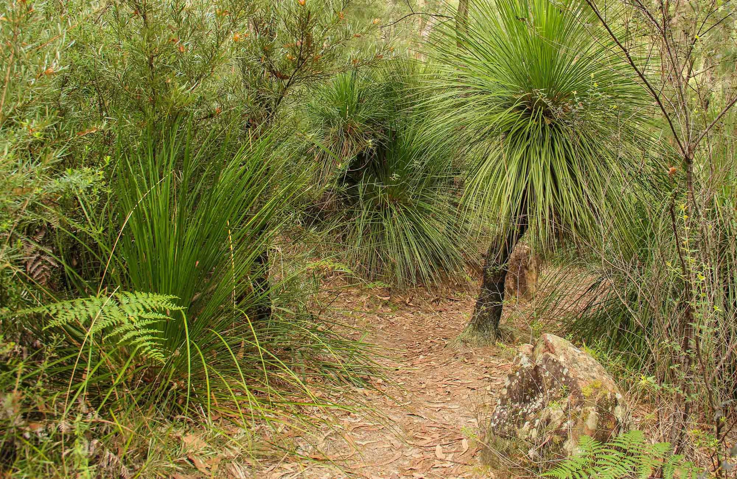 Grass Tree Circuit - Redcliffe Tourism
