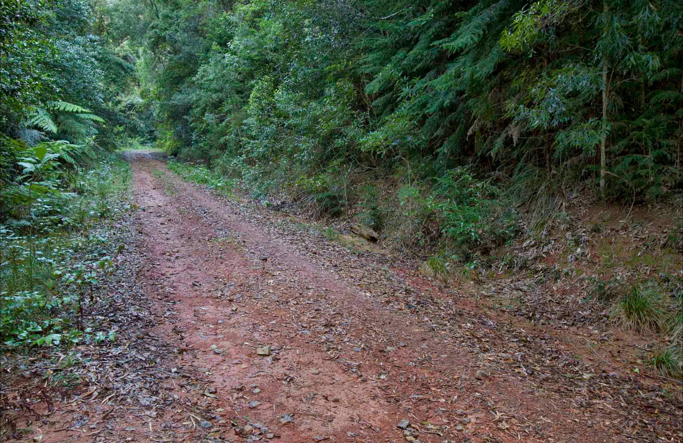 Cascade mountain bike trail - Redcliffe Tourism