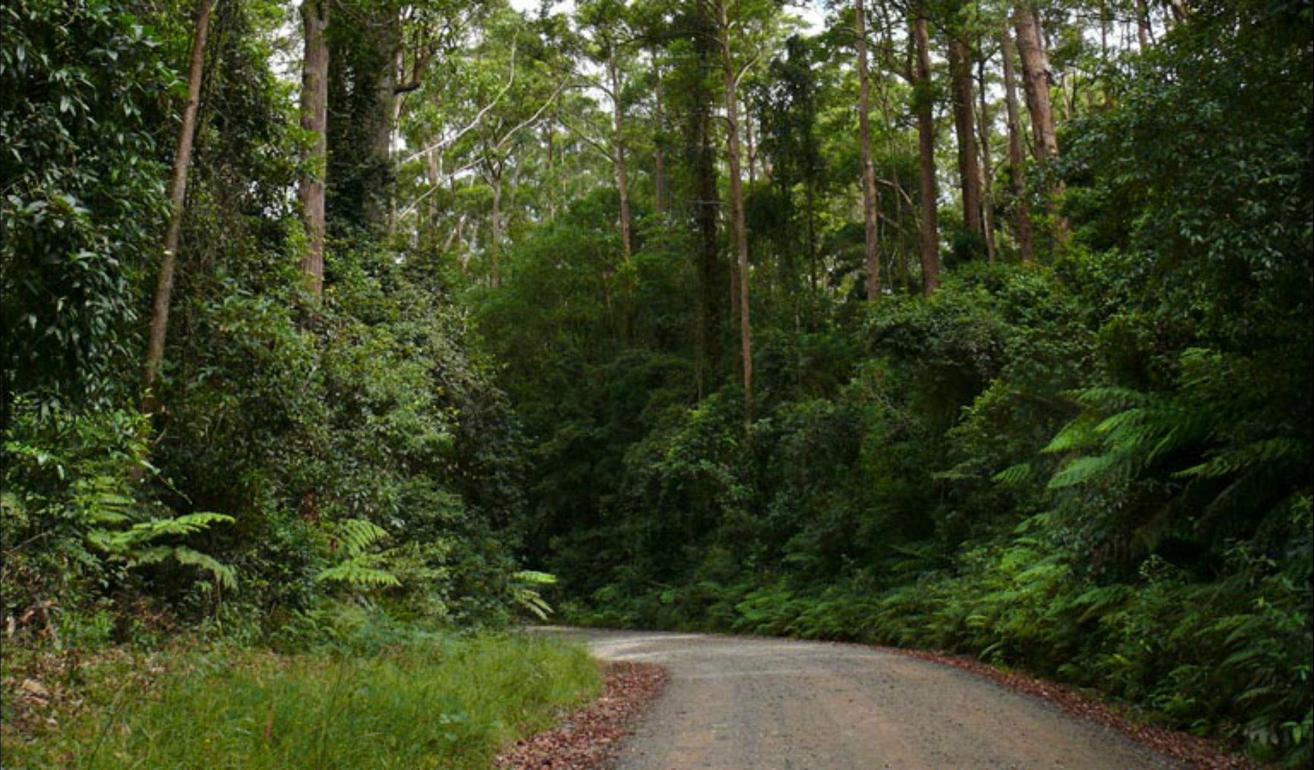 Moonpar Forest drive - Cascade National Park - Redcliffe Tourism