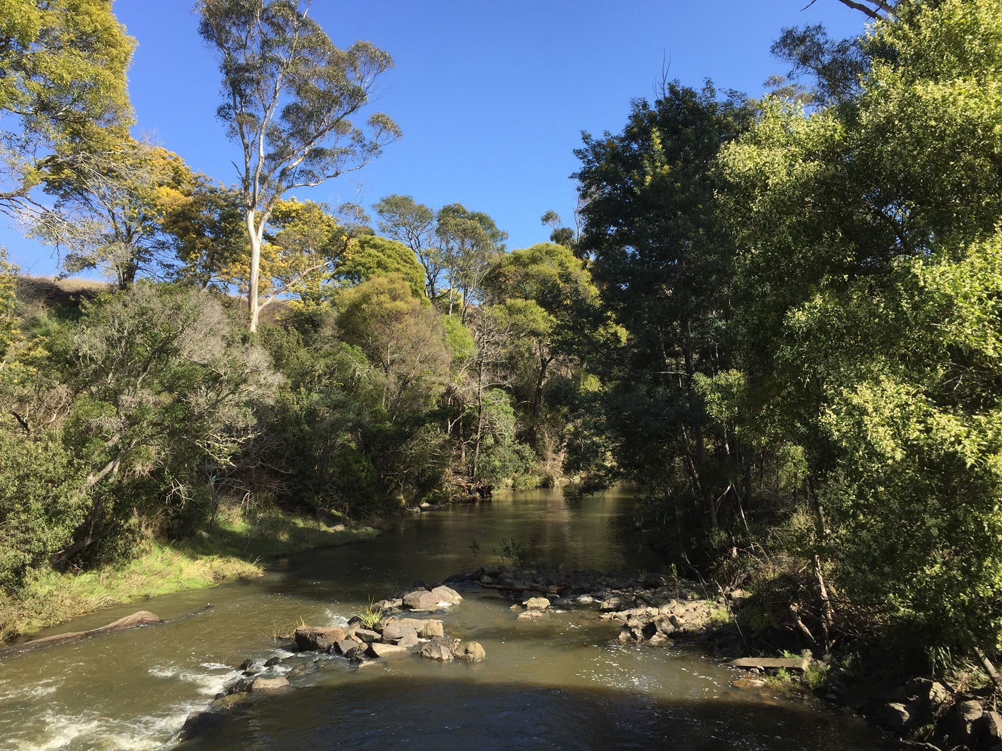 Pipers River Board Walk - Redcliffe Tourism