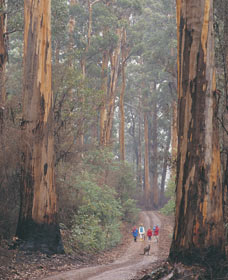 Beedelup National Park - Redcliffe Tourism