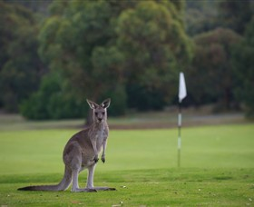 Anglesea Golf Club - Redcliffe Tourism
