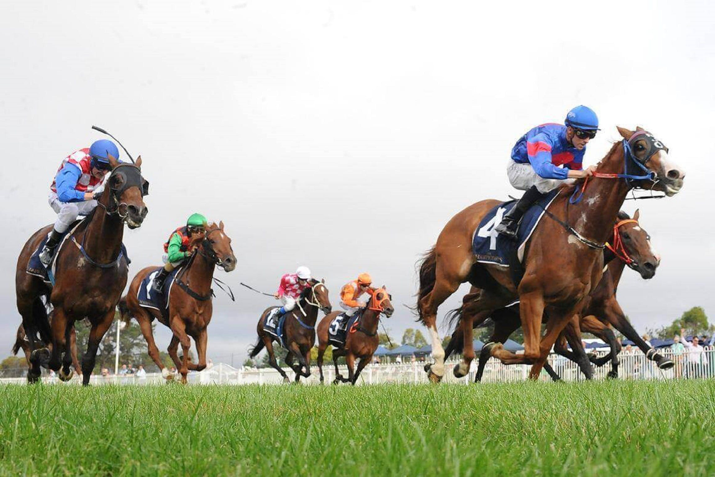 Christmas Cup Race Day - Redcliffe Tourism