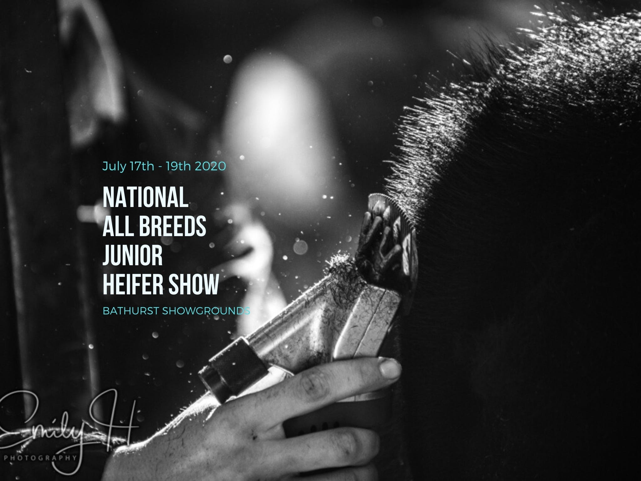 National All Breeds Junior Heifer Show - Redcliffe Tourism