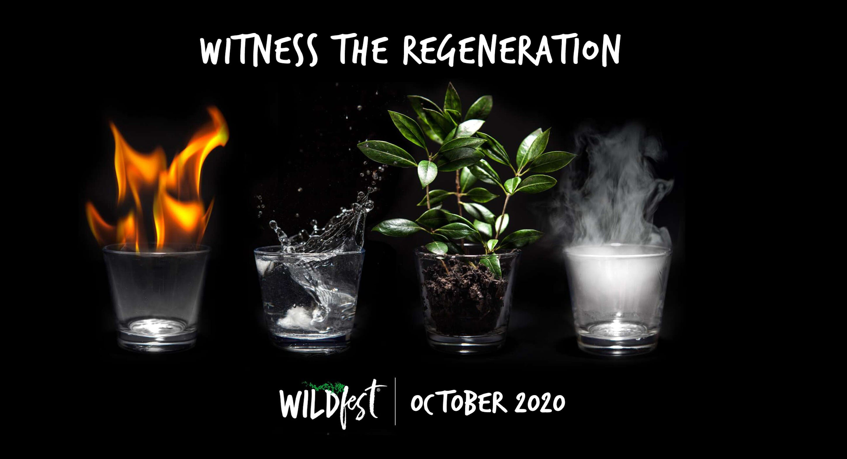Wildfest - Annual Festival - Redcliffe Tourism