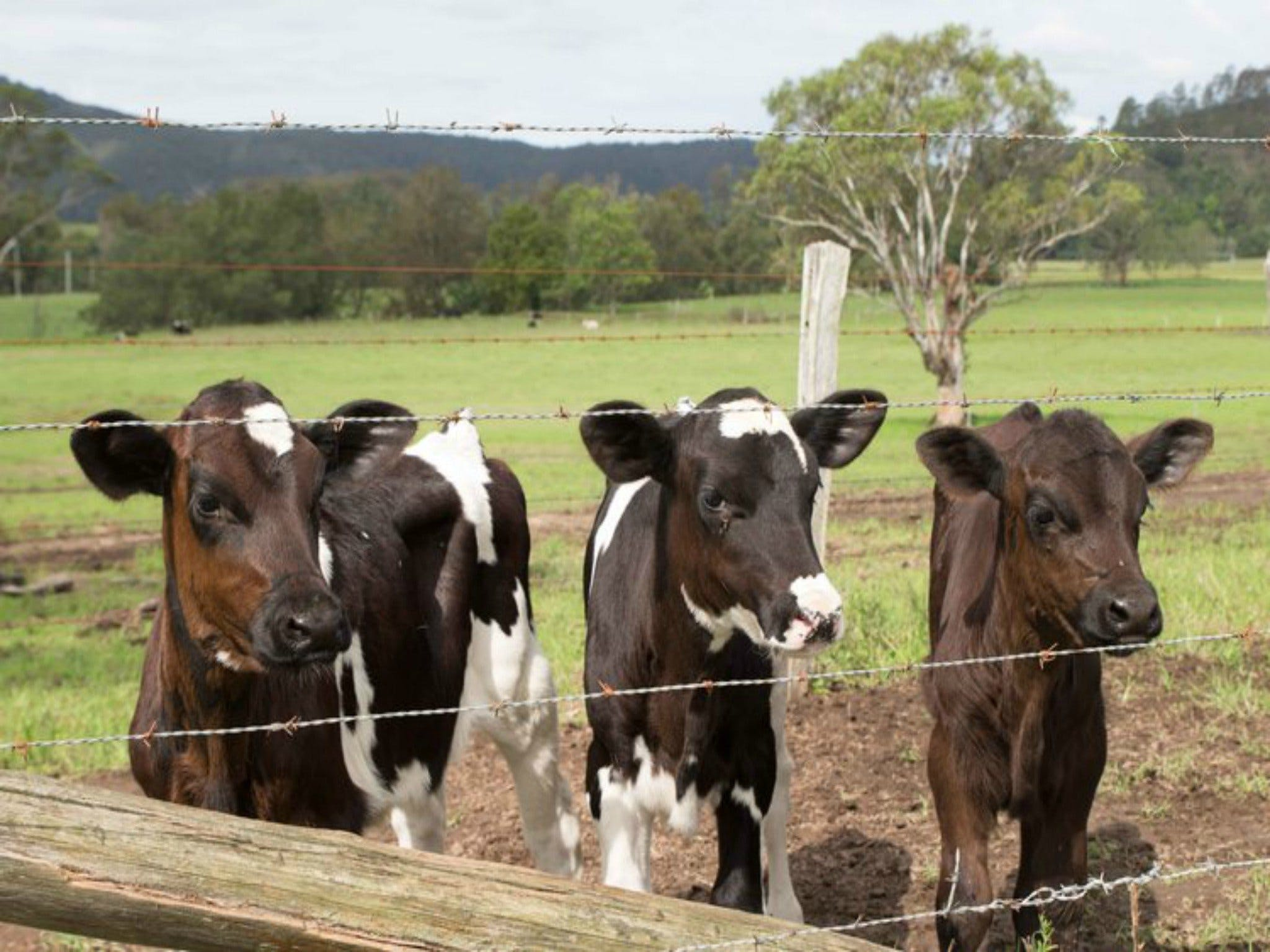 Bandon Grove Farm Tours - Redcliffe Tourism