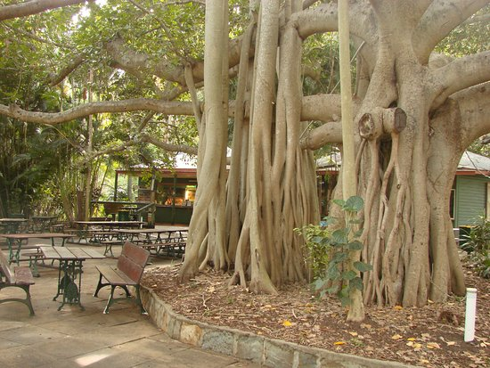 Gardens Tearooms - Redcliffe Tourism