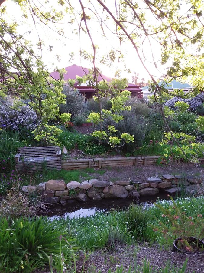 Frog Song at Willunga - Redcliffe Tourism